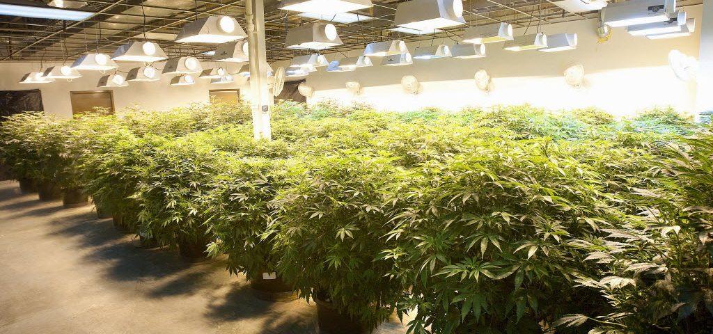 Grow Marijuana Cultivation Center