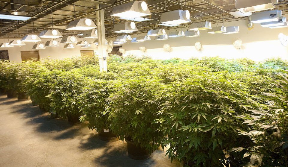 Grow Marijuana Cultivation Center