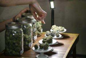 Medical Marijuana Florida