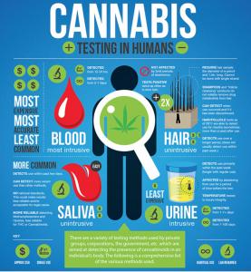 cannabis testing in humans