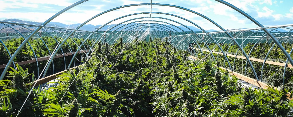 Maryland Grower Licenses, MetroXMD