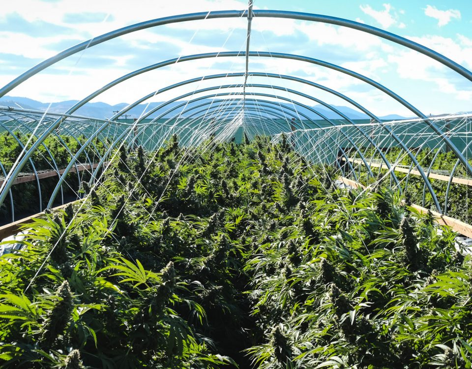 Maryland Grower Licenses, MetroXMD